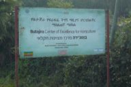 Butajira Center of Excellence for Horticulture next to Butajera, a town south of Addis Abbaba