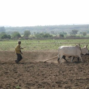 Hard labour, low output: Traditional farmer in Ethiopia